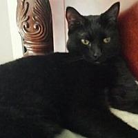 Adopt A Pet :: Bobby - Oviedo, FL