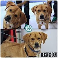 Adopt A Pet :: Benson - Kimberton, PA