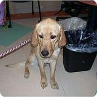 Adopt A Pet :: COOKIE - La Mesa, CA