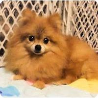 Adopt A Pet :: Magnolia - Mooy, AL