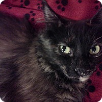 Adopt A Pet :: Penelope - McHenry, IL