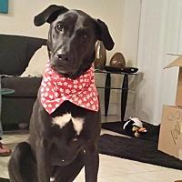 Adopt A Pet :: Rafael - Key Biscayne, FL
