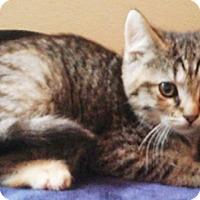 Adopt A Pet :: Raccoon - North Highlands, CA