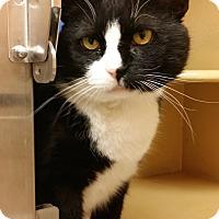 Adopt A Pet :: Bobby - Colmar, PA