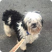 Adopt A Pet :: Spot - Oak Ridge, NJ