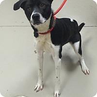 Adopt A Pet :: Dumplin - Decatur, AL