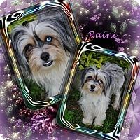 Adopt A Pet :: Raini - Crowley, LA