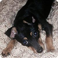 Adopt A Pet :: Tabasco - Christiana, TN