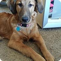 Adopt A Pet :: Goofy - Richmond, VA