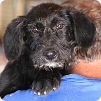 Adopt A Pet :: Maui Baby - Glastonbury, CT