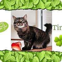 Adopt A Pet :: Tink - Harrisburg, NC