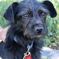 Adopt A Pet :: Peete - Oakley, CA