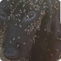 Adopt A Pet :: Bimini - New Canaan, CT