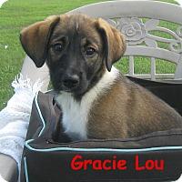 Adopt A Pet :: Gracie Lou - Glastonbury, CT