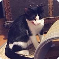 Adopt A Pet :: TJ - Southington, CT