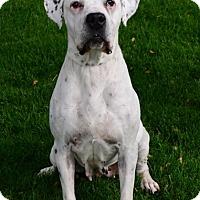 Adopt A Pet :: Zara - Gardnerville, NV
