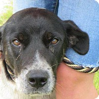 Adopt A Pet :: Rosie- Foster Home Needed - Wood Dale, IL