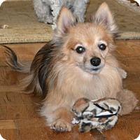 Adopt A Pet :: Marty - Palatine, IL