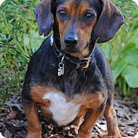 Adopt A Pet :: Butterfinger - Cedartown, GA