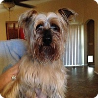 Adopt A Pet :: Ebony - Goodyear, AZ