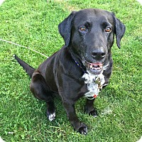 Adopt A Pet :: Star - Minneapolis, MN