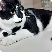 Adopt A Pet :: Mews - Kenai, AK