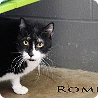 Adopt A Pet :: Romeo - Texarkana, AR