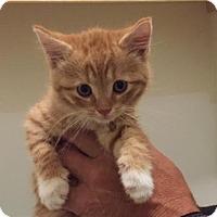 Adopt A Pet :: WINSLOW - Burlington, NC