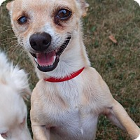 Adopt A Pet :: Elliot: Loves Attention (PA) - Spring City, TN