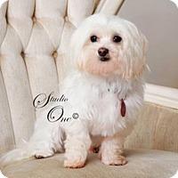 Adopt A Pet :: OakLee - Beloit, WI