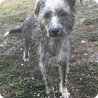 Adopt A Pet :: Carol - Boca Raton, FL