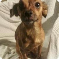 Adopt A Pet :: Ohana - Fort Wayne, IN