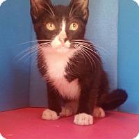 Adopt A Pet :: Stevie - Ocala, FL