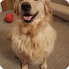 Adopt A Pet :: Florence