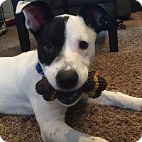 Adopt A Pet :: Crawford - Joliet, IL