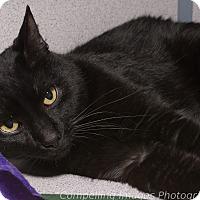 Adopt A Pet :: Dexter - Fort Collins, CO