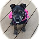 Adopt A Pet :: Deena