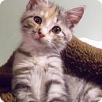 Adopt A Pet :: Jackie - Morganton, NC