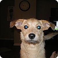Adopt A Pet :: Oliver - Apex, NC