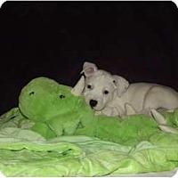 Adopt A Pet :: Hobbes - Phoenix, AZ