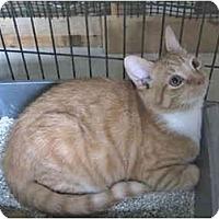 Adopt A Pet :: Owen - Colmar, PA