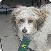 Adopt A Pet :: Victoria - Culver City, CA