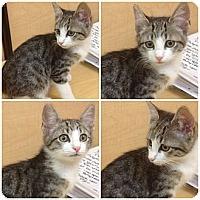 Adopt A Pet :: Cyro - Modesto, CA
