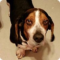Adopt A Pet :: Stanley - Novi, MI