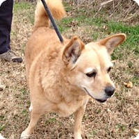 Adopt A Pet :: LEXIE/part of bonded pair - Glastonbury, CT