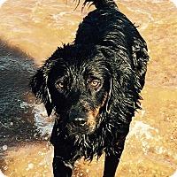 Adopt A Pet :: Jack - Buchanan Dam, TX