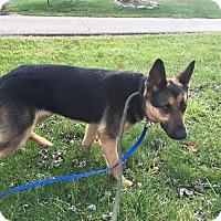 Adopt A Pet :: Lady - Zanesville, OH
