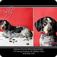 Adopt A Pet :: Mollie - Mt. Gilead, OH