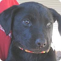 Adopt A Pet :: Matlock - Wharton, TX