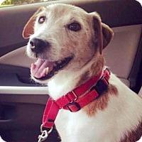 Adopt A Pet :: David - Austin, TX